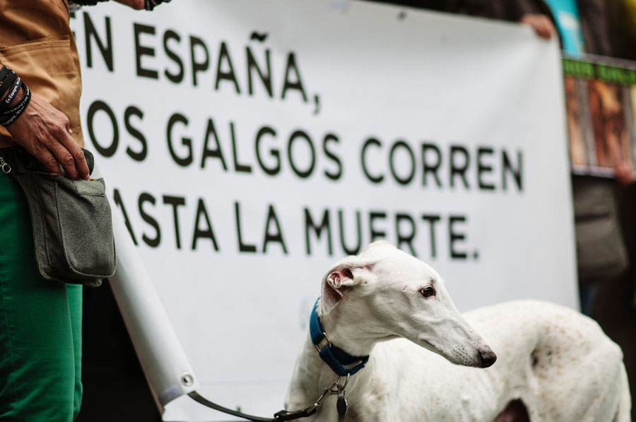 SOS Galgos, Barcelona