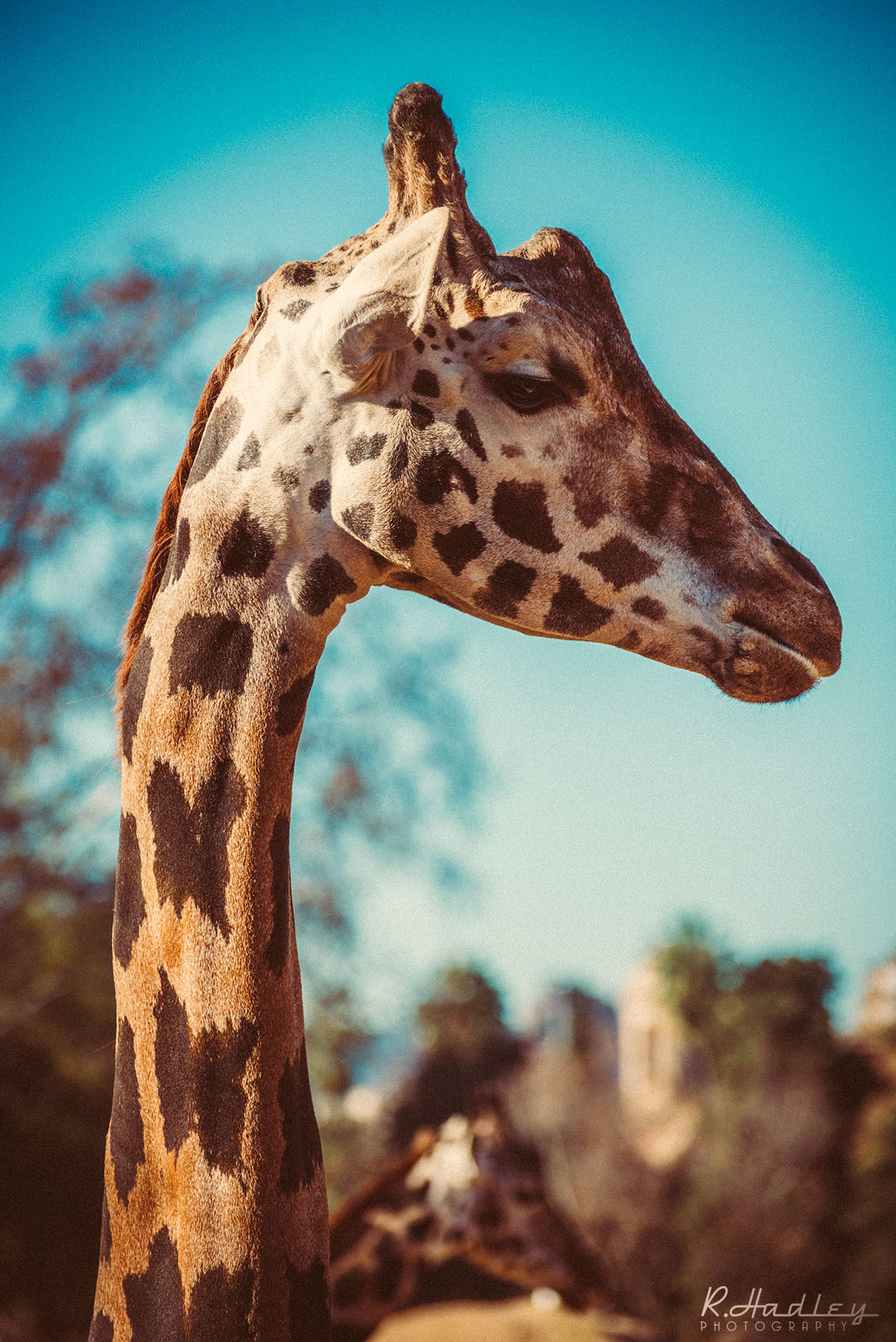 Barcelona Zoo | Event Photographer